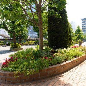 カテリーナ三田 タワースイート 本芝公園前の植栽